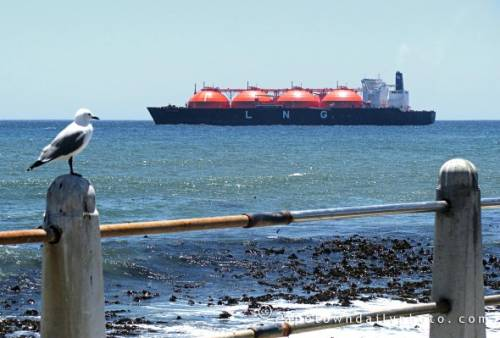 Liquefied natural gas tanker off Cape Town
