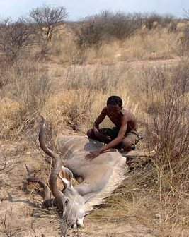 Kalahari bushman after a successful persistence hunt of a male kudu