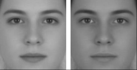 Facial contrast suggests sex - visual illusion