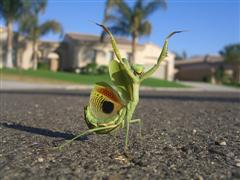 Ninja mantis - photo from Flickr